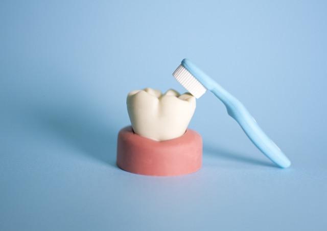 長い人生を楽しむために丈夫な歯を
